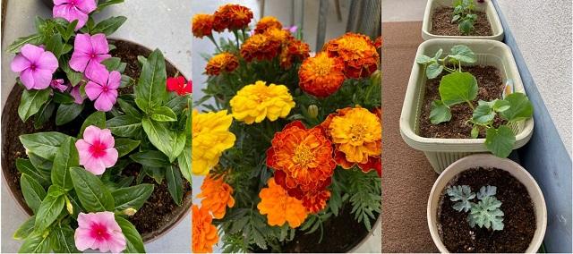グリーンカーテンと夏の花